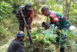 Warga Bonggo tanam pohon untuk ketahanan pangan