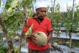 Sumsel dorong tiap kabupaten memiliki produk hortikultura unggulan