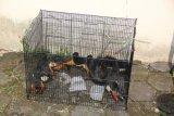 BKSDA Yogyakarta lepasliarkan satwa dilindung yang diamankan polisi