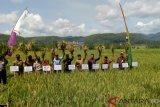 Kulon Progo kembangkan lahan pertanian organik 200 hektare