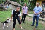 Wakil Ketua Komite II DPD Parlindungan Purba (kanan) bersama petugas Dinas Ketahanan Pangan dan Peternakan Sumut meninjau vaksinasi rabies terhadap anjing milik warga di Desa Bawodesolo, Gunung Sitoli, Sumatera Utara, Sabtu (12/1/2019). Pada data Dinas Ketahanan Pangan dan Peternakan Sumut di kepulauan Nias sepanjang tahun 2018 jumlah gigitan Hewan Penular Rabies (HPR) terjadi 494 kasus dan menyebabkan tiga orang meninggal dunia. (Antara Sumut/Septianda)