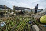BPBD dorong pengembangan hutan bakau di Teluk Palu