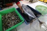 KKP pastikan 60 persen tangkapan tuna hasil jerih payah nelayan kecil