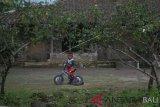 Seorang anak bermain sepeda di halaman rumahnya di lereng Gunung Merapi, Mriyan, Musuk, Boyolali, Jawa Tengah, Kamis (17/1/2019). Meskipun sering terjadi guguran Gunung Merapi beberapa waktu belakangan ini, aktivitas warga setempat masih berjalan dengan normal dengan imbauan tidak beraktivitas di radius tiga Km dari puncak gunung. ANTARA FOTO/Aloysius Jarot Nugroho/nym.