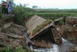Banjir Solok Selatan, 4,25 hektare tanaman padi puso