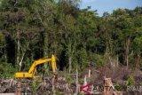 KLHK Lengkapi Berkas Petunjuk Jaksa Perambahan Cagar Biosfer