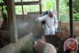 Wabah Flu Babi Menewaskan 76 Orang Rajasthan, India