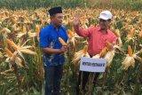 Amran Sulaeman pastikan stok beras nasional aman sampai delapan bulan