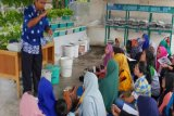 Puluhan Ibu di Pangkalan Kerinci Ikuti Pelatihan Hidroponik