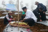 Penanaman bawang putih di Temanggung capai 1.930 hektare