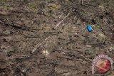 Luas Lahan Sengketa di Riau 283,277 Hektare