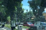 Anggrek di boulevard Kotabaru Yogyakarta hilang