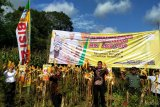 Kementan dorong petani menambah populasi tanaman jagung (VIDEO)