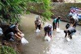 Sebagai upaya pencegahan dari kepanasan Dinas Kelautan dan Perikanan Sumsel tebar benih ikan langka