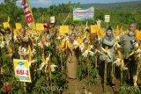 Polbangtan Yogyakarta-Magelang dukung pengembangan jagung di Gunung Kidul
