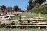 Banjarnegara kembangkan suvenir wol domba Batur