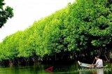 Pengelola menyediakan perahu untuk wisatawan yang akan menyusuri kawasan ekowisata mangrove di Kecamatan Muaragembong, Kabupaten Bekasi, Jawa Barat. (Antaranews Megapolitan/Foto: Pradita Kurniawan Syah).