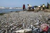Penjelasan BMKG terkait fenomena ikan mati yang dikaitkan dengan gempa