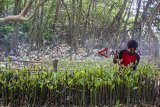 Pekerja memeriksa pohon magrove untuk ditanam di Taman Ekowisata Mangrove Tangkolak, Cilamaya Wetan, Karawang, Jawa Barat, Sabtu (23/2/2019). Penanaman pohon mangrove tersebut untuk meningkatkan perbaikan lingkungan dan upaya pencegahan abrasi di kawasan pesisir pantai. ANTARA JABAR/M Ibnu Chazar/agr.