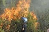 Forest fires gut 1,136 hectares of area in Riau