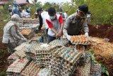 Karantina Pertanian Biak musnahkan telur ayam ilegal