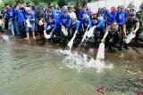 KKP luncurkan kawasan tambak kakap putih perdana di Indonesia
