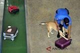 BNNP DIY tempatkan anjing pelacak di Bandara Adisutjipto