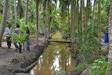 Parigi Moutong miliki 26.522 ha perkebunan kelapa
