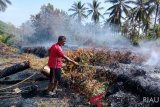 Kebakaran Meranti menyebar cepat bakar kebun sagu warga