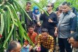 Pengembangan agrowisata menjadi peluang ekonomi baru Kalteng