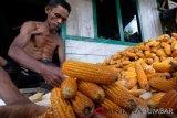 Harga Jagung Petani Solok Selatan Turun Rp1.700 Perkilogram