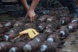Dandim: Penemuan mortir di Dago yang terbanyak se-Indonesia