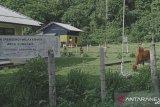Warga Pulau Moyo NTB kesulitan kembangkan perekonomian karena listrik