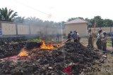 Bawang dan jahe ilegal dari Malaysia dimusnahkan di Dumai