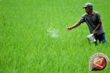 Dinas pertanian targetkan kartu tani selesai Juni