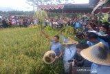 Cawapres Sandiaga Uno panen padi di Kulon Progo