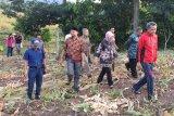 Pemprov jadikan kawasan wisata Lejja sebagai kebun buah percontohan