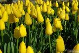Kota di Filipina ubah sampah plastik jadi tulip