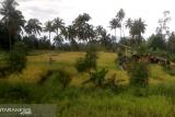 Pemkab Mitra fasilitasi penerbitan sertifikat lahan persawahan