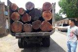 Polisi Solok Selatan amankan dua truk kayu diduga dari TNKS