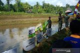 BPTP Yogyakarta memperkenalkan sistem jajar legowo ke petani Pathuk