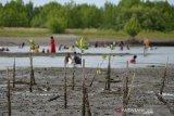 Warga beraktivitas di kawasan hutan mangrove pesisir Desa Lampulo, Banda Aceh, Minggu (7/4/2019). Kementerian Lingkungan Hidup dan Kehutanan (LHK) menargetkan hingga tahun 2045 akan melakukan rehabilitasi hutan manggrove secara terus menerus minimal 65 ribu hektare setiap tahun sehubungan terjadinya kerusakan hutan manggrove seluas 175 ribu hektare setiap tahun dari total luas sebelumnya 3,5 juta hektare. (Antara Aceh/Ampelsa)