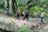 BBKSDA temukan jejak harimau dewasa di Kampar
