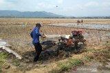 Petani diingatkan pastikan kecukupan air saat kemarau