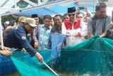 Tamrin panen perdana ikan lele dengan bioflok
