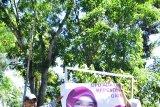 Bawaslu Tanah Datar bersihkan atribut kampanye di masa tenang pemilu