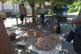 Di Pulau Sebesi harga kakao anjlok