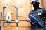 Flight : burung liar Sumatera mengalami krisis karena makin marak diburu