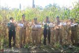 Kelompok Tani Sri Rezeki temu lapangan, perkuat pertanian di Kamang