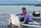 Balai Karantina lepas liarkan seratusan ribu baby lobster